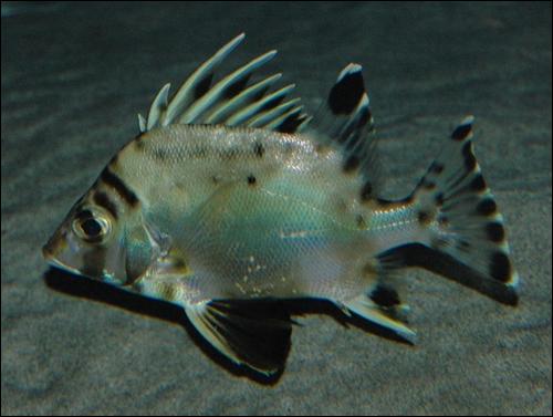 150116_fish_01