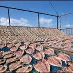 「星野リゾート 界 伊東」で子供の食育「干物作り体験」開催中