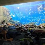 夜の水族館にお泊り!夏休みは鴨川シーワールドの人気プランを楽しもう
