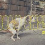 犬のおトイレタイムの瞬間を集めたトイレ専用カレンダーが発売
