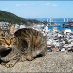 猫になりたい猫好き集合!「尾道 猫好きのまつり」参加受付開始
