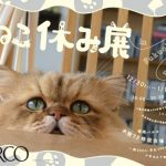 スター猫の秋冬新作コレクション「ねこ休み展 in PARCO」 第三弾は福岡にて開催!
